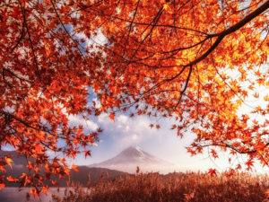 [News] Japan Autumn Leaves Forecast Japan 2017