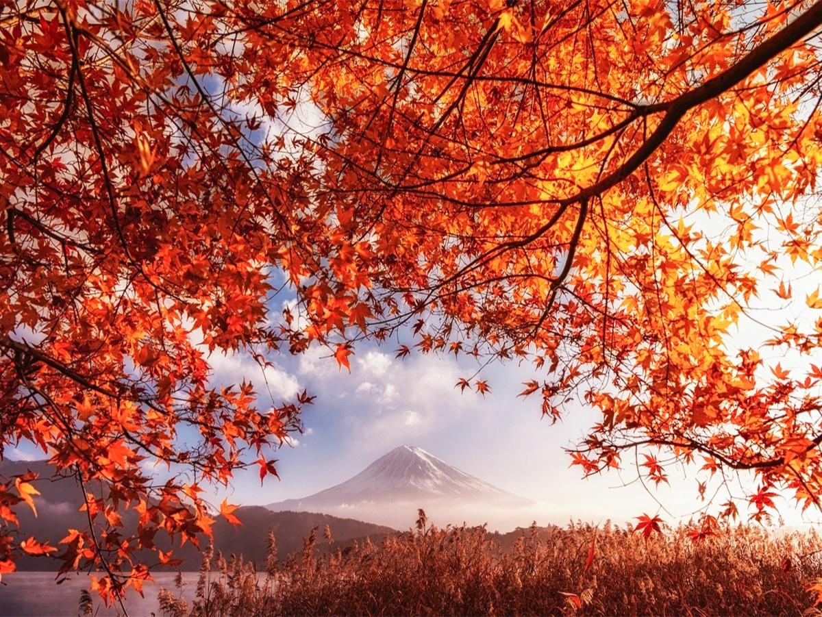 [News] Japan Autumn Leaves Forecast Japan 2017 – Go ...