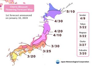 [News] Japan-Sakura Cherry Blossoms Forecast (Update: 2019 Jan)