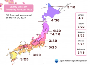 [News] Japan-Sakura Cherry Blossoms Forecast (Update: 2019 Mar)