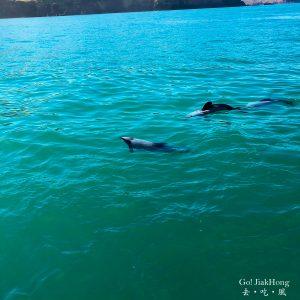 [行程] 紐西蘭南島- 基督城到阿卡羅阿一日遊
